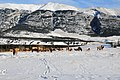 Elk herd of Canmore - panoramio.jpg