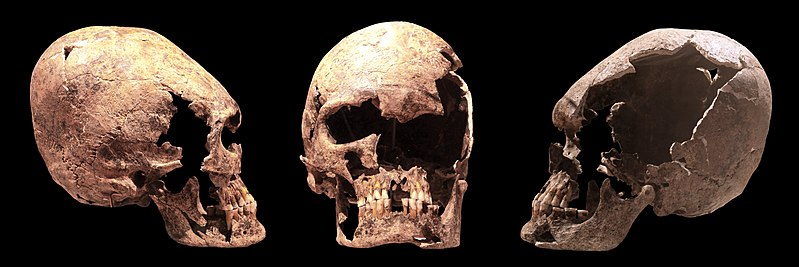 File:Elongated skull IMG 6686-6689.jpg
