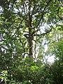 En'route to Duwili ella in Knuckels Range through Raththota access 2.jpg