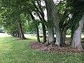 Endview Plantation Grounds North Newport News VA USA June 2020.jpg
