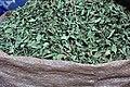 Ericales - Camellia sinensis - 1.jpg