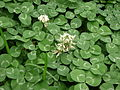 Especie de flora endémica en Glorieta de Vaqueritos 004.JPG