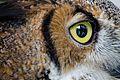 Eye-wildlife (24242561661).jpg