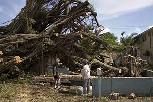 Effects of Hurricane Katrina in Florida - Tree damage in Dania Beach in Broward County