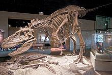 FMNH Daspletosaurus.jpg