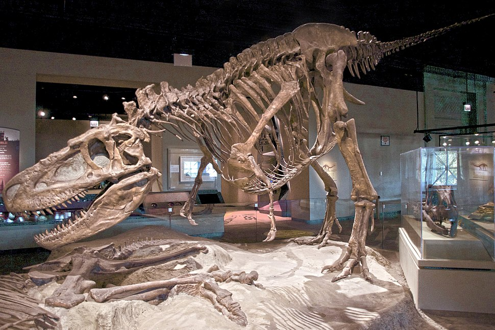FMNH Daspletosaurus