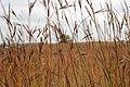 Fall on the prairie (15327997211).jpg