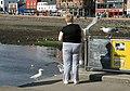 Feeding the gulls at Oban - geograph.org.uk - 1339986.jpg