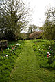 Feeringbury Manor grass path with tulip verges, Feering Essex England.jpg