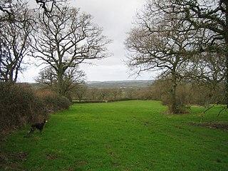 Whitevine Meadows