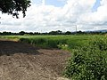 Fields at Gilbert's End Farm - geograph.org.uk - 833600.jpg