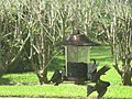 Finches Fighting for Food.jpg