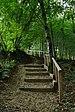 Fingig Forest 2013 01.JPG