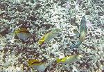 Fish 20 (30880483192).jpg