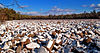 Flickr - Nicholas T - Boulder Field.jpg