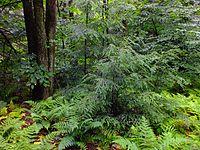 Flickr - Nicholas T - Devil's Elbow Natural Area (Revisited) (3)
