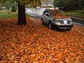 Flickr - Nicholas T - Leaf Litter.jpg