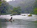 Flickr - archer10 (Dennis) - DSCN1177B - Mopan River.jpg