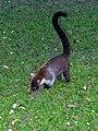 Flickr - archer10 (Dennis) - Guatemala-1340.jpg