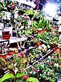 Floricultura ao ar livre !.jpg