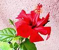 Flowers15Slovakia1.JPG
