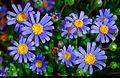 Flowers (7171670995).jpg