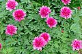 Flowers Peony 02.jpg