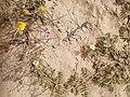 Flowers in Khobar.jpg