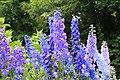 Flowers in National Botanic Garden,Dublin,Ireland - panoramio.jpg