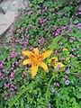 Flowers of Baghdad 20.jpg