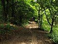 Footpath in Little Wold Plantation - geograph.org.uk - 930224.jpg