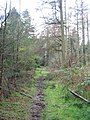 Footpath in Southleigh Wood - geograph.org.uk - 348151.jpg