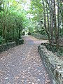 Footpath into Tintern Woods - geograph.org.uk - 1543480.jpg