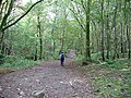 Footpath through Springs Woods - geograph.org.uk - 565622.jpg