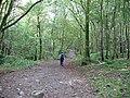 Footpath through Springs Woods - geograph.org.uk - 565622.jpg