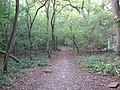 Footpath through the Woods - geograph.org.uk - 1509580.jpg