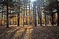 Forêt Du Coteau (33351053).jpeg