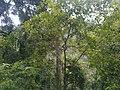 Forest,pampa,kerala - panoramio.jpg