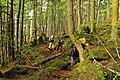 Forest (10128844535).jpg