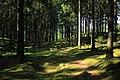 Forest Run (157399607).jpeg
