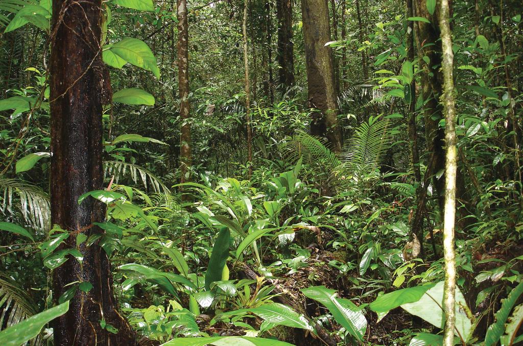 French Guiana Natural Disasters Wikipedia