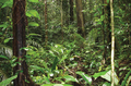 Forest close to the Mana River at Angoulême, French Guiana - journal.pone.0057756.g001-bottom.png
