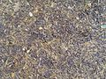 Forest ground wood chips pine needles.jpg
