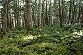 Forest in Yatsugatake 51.jpg
