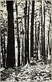 Forestry and community development (1918) (14595867088).jpg