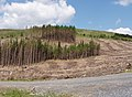Forestry workings - geograph.org.uk - 487259.jpg