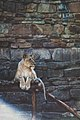 Fort Worth Zoo, Fort Worth, United States (Unsplash).jpg