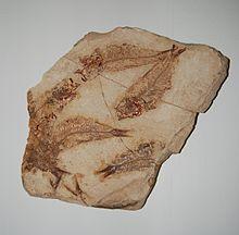 fossils in rocks