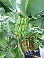 Früchte Frutigen2.JPG