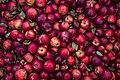 Freshly Picked Apples (Unsplash).jpg
